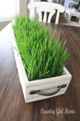 grass planted in box
